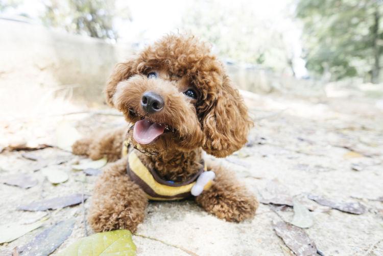 犬の過剰歯(二重歯)・足りない(欠歯)【食事・予防対策は?】