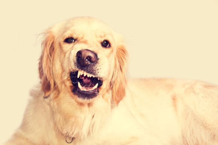 犬の根尖周囲病巣(こんせんしゅういびょうそう)【まとめ】