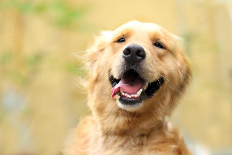 犬の根尖周囲病巣(こんせんしゅういびょうそう)【間違いやすい病気は?】