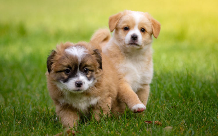 犬の糖尿病【予防対策】