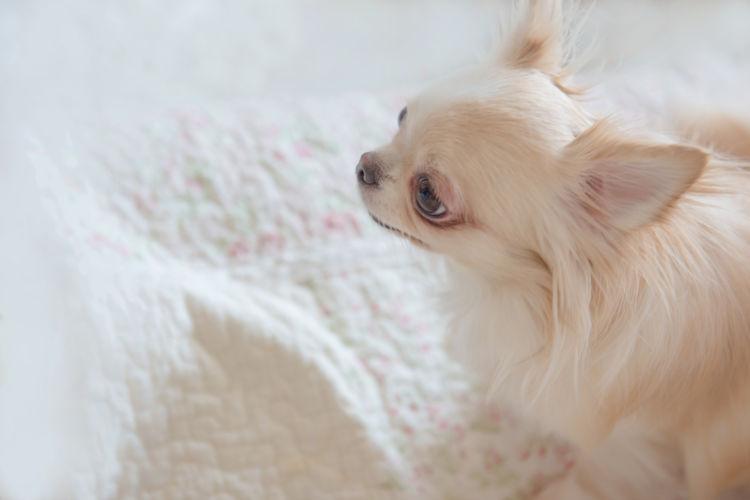 犬の水頭症