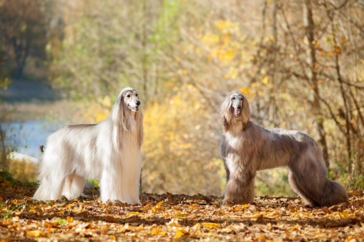 犬の甲状腺機能低下症【予防対策】