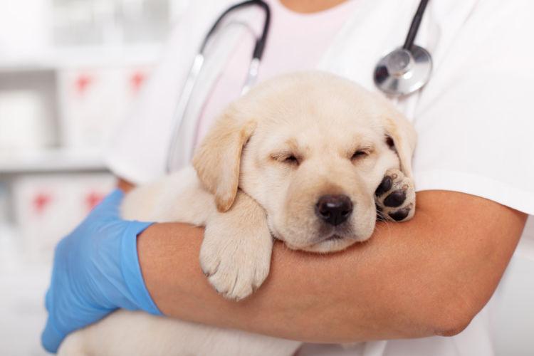 犬の副腎皮質機能低下症(アジソン病)【治療方法】
