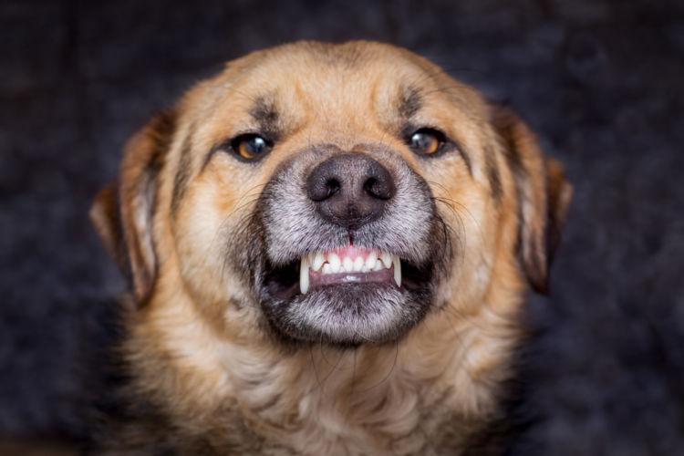 犬の不正咬合【発症しやすい犬種】