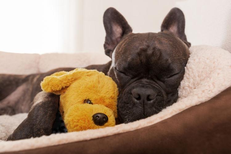 犬のガマ腫【なりやすい犬種】