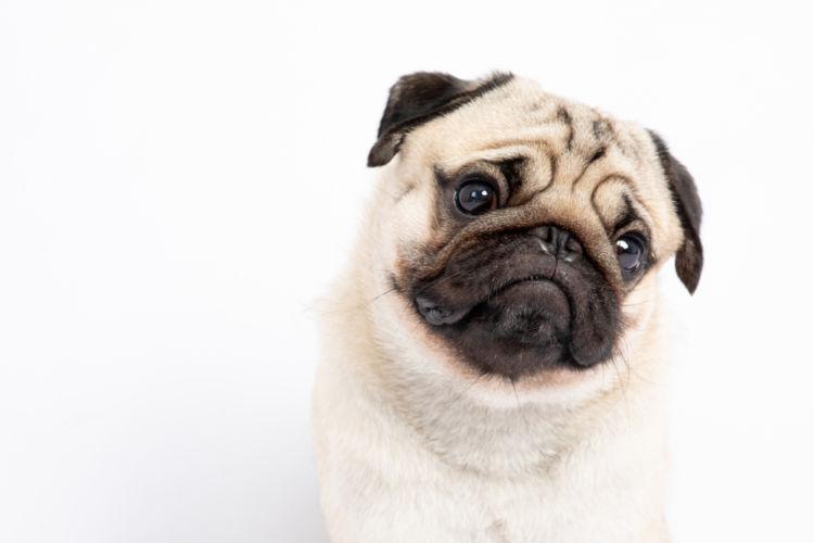 犬のガマ腫【まとめ】
