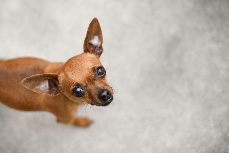 犬の脊髄空洞症【原因】
