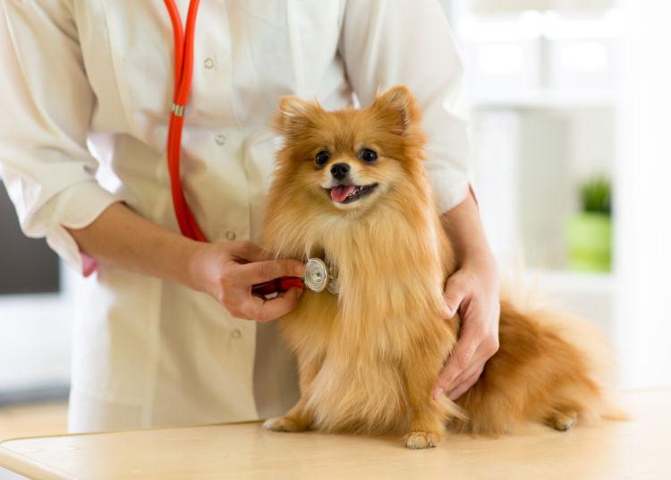 犬の脊髄空洞症【検査・診断方法】
