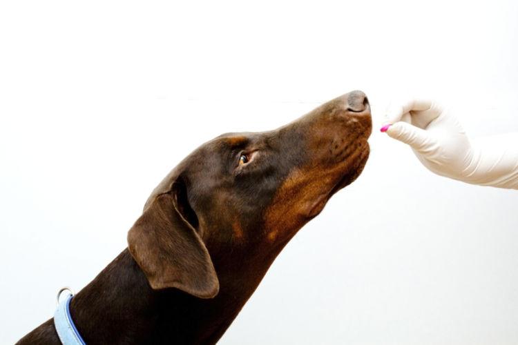 犬の皮膚糸状菌症【診断方法】