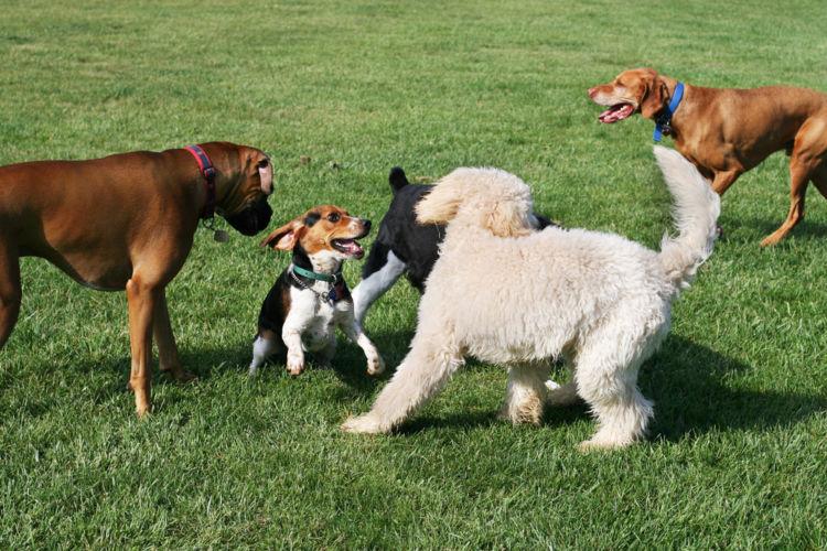 犬の疥癬(ヒゼンダニ症)【予防対策】