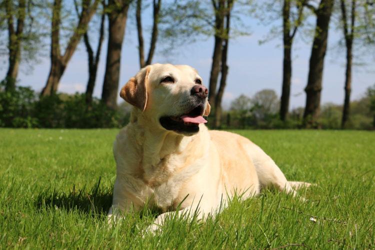 【内分泌科担当獣医師監修】犬のカラダの調節システム「ホルモン」内分泌系の仕組みと役割とは?